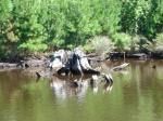 Beautiful River Debris